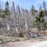 modrava_-_zničený_les[1]